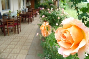 Restaurant - Cafe, Athina Rooms to let Athina Rethymno Crete Greece